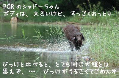 nagano_03.jpg