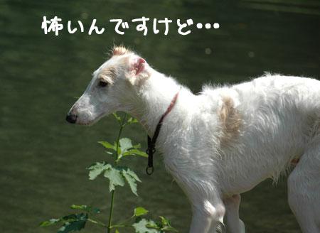20060903-10.jpg