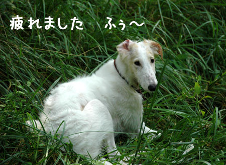 20060903-12.jpg
