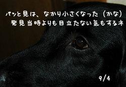 20060904-3.jpg