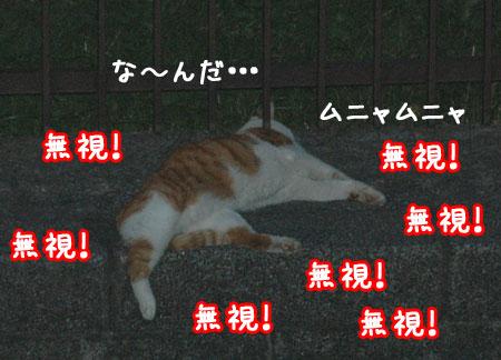 20060905-3.jpg
