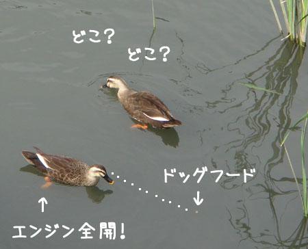 20060922.jpg