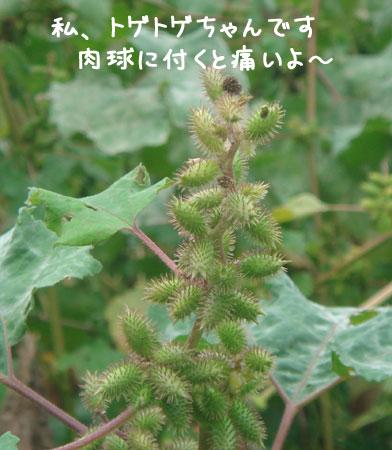 20060930.jpg