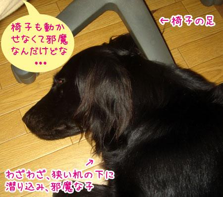 20070530.jpg