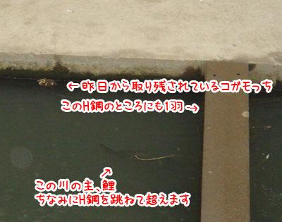 20070702.jpg