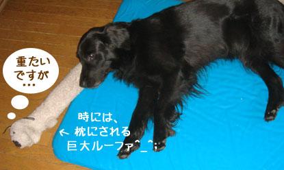 20090802-02.jpg