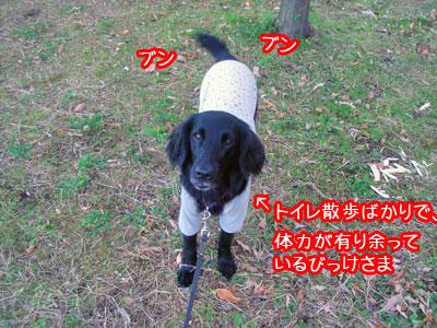 20091214-03.jpg