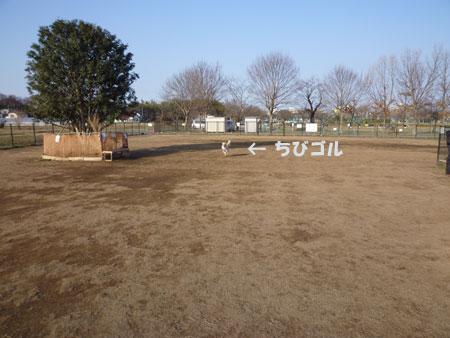 20110226-01.jpg