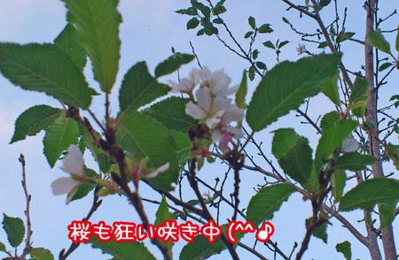 20111017-02.jpg