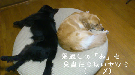 20121127.jpg