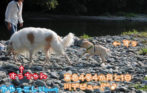 レトリバー 水遊び!