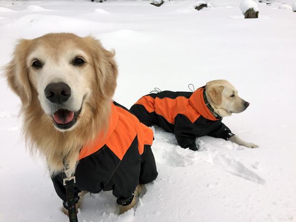 犬連れスノーシュー @桧原湖