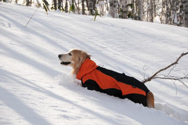 犬連れ雪遊び 菅平 スノーシューハイク sgt01.jpg