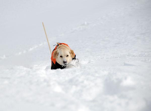 犬連れ雪遊び 菅平 スノーシューハイク sgt02.jpg
