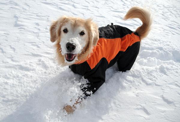犬連れ雪遊び 菅平 スノーシューハイク sgt03.jpg