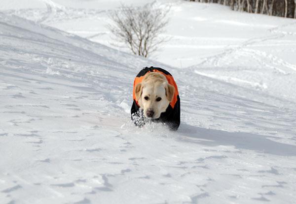 犬連れ雪遊び 菅平 スノーシューハイクsgt04.jpg