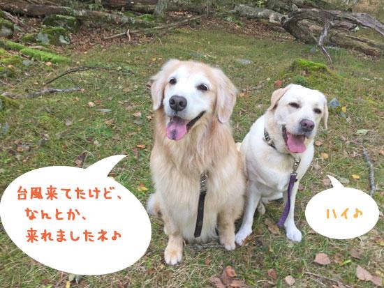 山籠もり 犬連れキャンプ 大型犬 ゴールデンレトリーバー,ラブラドールレトリーバー,フラットコーテッドレトリーバー